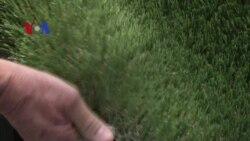 Green Beat 060115 Fake Lawns
