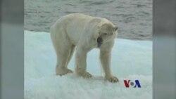 北极冰雪融化 更多船只通过极地走捷径