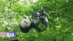 ყველაზე ნელი რობოტი - ატლანტის ბოტანიკურ ბაღში
