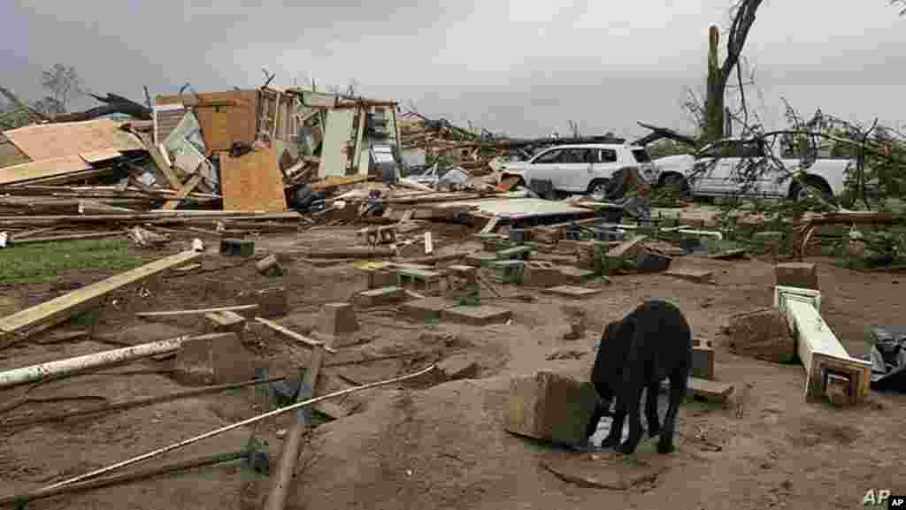 신종 코로나바이러스 감염증(COVID-19) 확산으로 신음하고 있는는 미국의 미시시피주 모스에서 주택들이 토네이도로 파괴돼 있다.