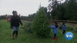 Christmas Tree Farmers Urge Americans to Buy Real Trees