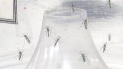 Type of Mosquito that Carries Zika Virus Found in Washington, DC