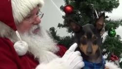 狗狗与圣诞老人合影留念