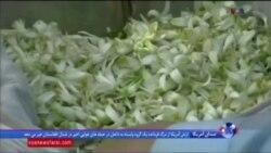تنوع آب و هوایی افغانستان برای تولیدات کشاورزی
