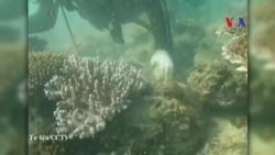Trung Quốc phủ nhận hủy hoại san hô ở Biển Đông