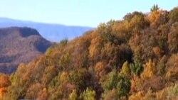 Боите на есента