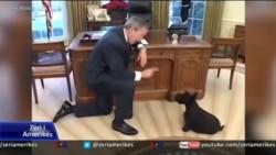 Kafshët shtëpiake të Shtëpisë së Bardhë