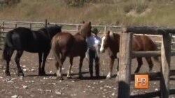 Кит Вэлли – настоящий ковбой