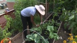 Urban Gardeners Can Harvest Quite a Crop From Small Spaces