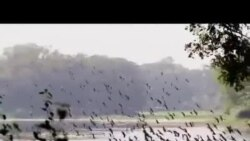 Winter Birds in Bangladesh