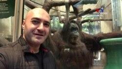 ԲԱՐԻ ԼՈՒՅՍ. Արման Թարջիմանյան՝ Վաշինգտոնի կենդանաբանական այգում