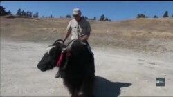 Вікно в Америку. Що роблять Гімалайські ЯКІ в горах Колорадо?