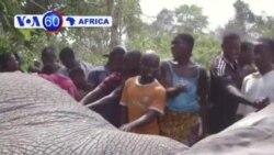 Manchetes Africanas 29 Janeiro 2014