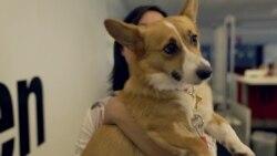 Усе більше американських компаній дозволяють приводити в офіс собак. Відео