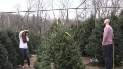 American Tradition: Buying a Christmas Tree
