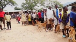 Tackling Rabies in Malawi, One Dog at a Time