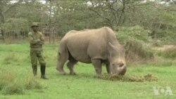 科技有助于拯救非洲濒危野生物种