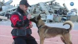 Hayat Kurtaran Köpekler