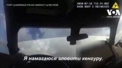 У Флориді поліцейські «затримали» кенгуру. Відео