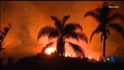 Каліфорнія потерпає від лісових пожеж. Відео