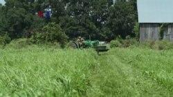 Meningkatnya Permintaan terhadap Sayur Mayur Organik