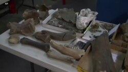 Во Лос Анџелес откриени голем број фосили