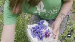 Молоді американські фермерки вчать вашингтонців їсти квіти. Відео