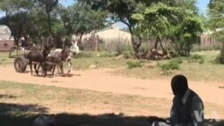 Donkey Carts Reliable Mode of Transport in Rural Gwanda North