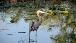 美国万花筒:国家公园之旅-佛罗里达大湿地国家公园