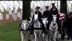 Arlington qabristonidagi xizmatchi otlar/Burial horses of Arlington