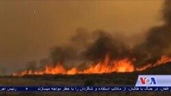 آتش سوزیها در کالیفرونیا هزاران تن را بیجا ساخته است