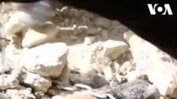 Un chien sauvé des décombres en Syrie