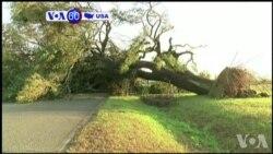 Manchetes Americanas 23 Janeiro: Ventos arrancam árvores pelas raízes