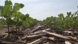 Super-potentne biljke u borbi protiv gladi