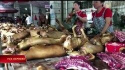 Truyền hình VOA 20/9/18: Chuyện thịt chó, mèo ở Việt Nam lên Quốc hội Mỹ