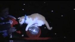 Made in USA: Театр кошек