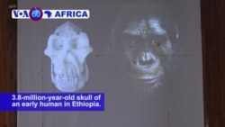 VOA60 Africa - Scientists have found 3.8-million-year-old skull of an early human in Ethiopia
