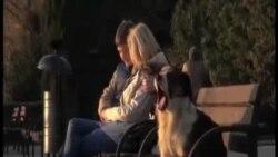 Psi lutalice u Sochiju