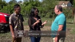 Beternak Lebah di Amerika (4)