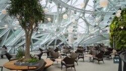 Симбіоз ботанічного саду та офісного приміщення: суперсучасна штаб-квартира компанії «Амазон» у Сіетлі. Відео