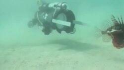 美国万花筒:水下机器人大战外来物种