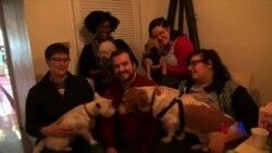 让狗吃好:走进爱犬咖啡店