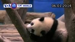 Đài Loan đón chú gấu trúc đầu tiên được sinh ra (VOA60)