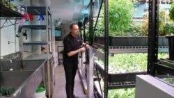 Tumbuh Pesatnya Industri Sayur Mayur Hidroponik