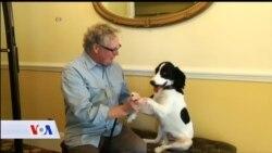 Psi mogu čovjeku umanjiti stres i krvni pritisak