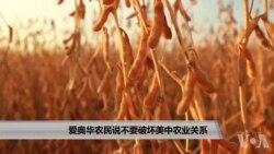 美国万花筒:爱奥华农民说不要破坏美中农业关系