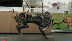 Dördayaqlı robot daha da təkmilləşdirilib