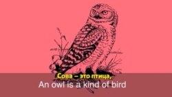 Английский за минуту - Night Owl - Сова