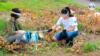 Al menos 200 jóvenes en Nicaragua se han dedicado a recoger basura en varios sitios del país [Foto: Cortesía]