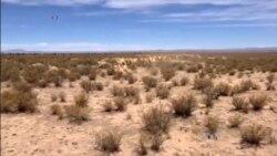 Locals, Llamas Benefit from Bolivian Conservation Program